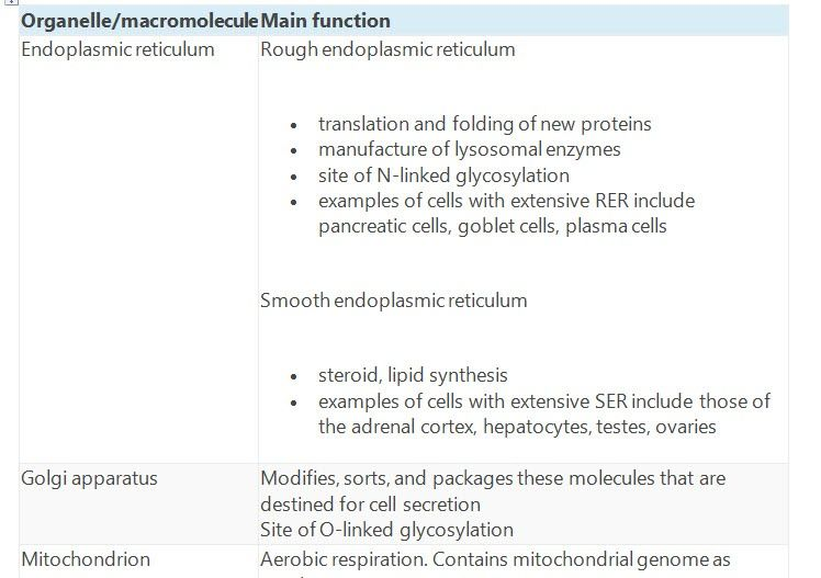 Table Summarises The Main Functions Of The Major Cell Organelles