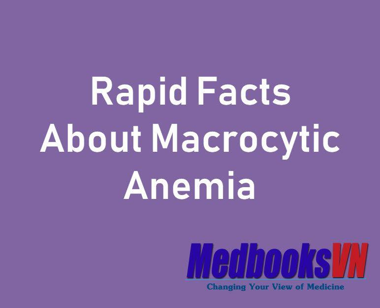 Rapid Facts About Macrocytic Anemia